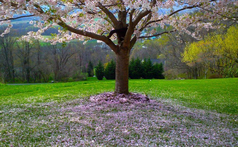Een Levensboom in de tuin: een aantal opties