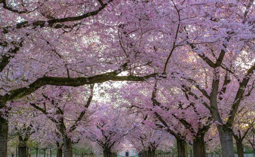 <h1>Boomverzorging in het voorjaar</h1>