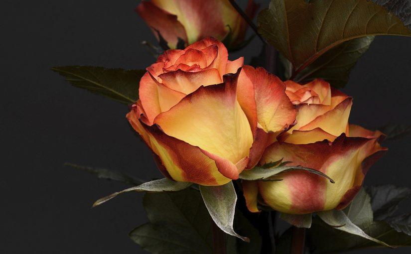 Hoe kan ik snel online bloemen bestellen